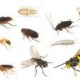"""""""Comer insetos"""" para reforçar a segurança alimentar: esta é a orientação da FAO, que lançou nesta segunda-feira (13) um programa para incentivar a criação em larga escala de insetos, alimento […]"""