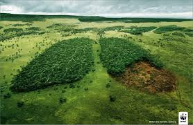 Entidades da sociedade civil pedem cumprimento do Código Florestal