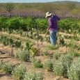 Um novo relatório das Nações Unidas afirma que o apoio a pequenos agricultores é uma das maneiras mais rápidas de tirar mais de 1 bilhão de pessoas da pobreza. O […]