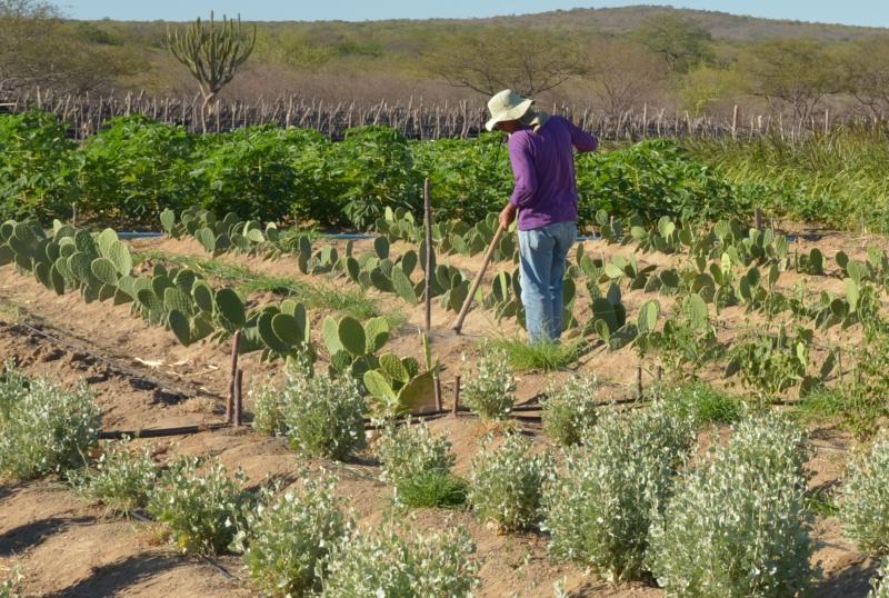 Apoio a pequenos agricultores pode tirar mais de 1 bilhão da pobreza