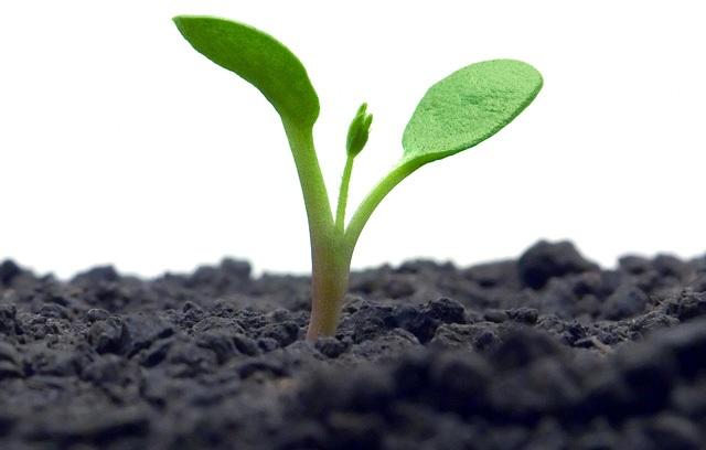 Meio Ambiente: um bom negócio para o seu negócio!