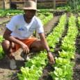 Potencializar a agricultura familiar é o meio mais eficaz de se combater a fome e a pobreza. Partindo dessa premissa, foi lançado na última sexta-feira, 22 de novembro, o Ano […]