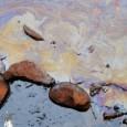 Brasília – Dois animais, uma ave e uma tartaruga, foram encontrados às margens do Lago Paranoá cobertos com a substância da mancha que apareceu no local. Os bichos foram levados […]