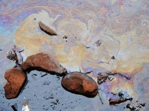 Animais são encontrados no Lago Paranoá cobertos de óleo