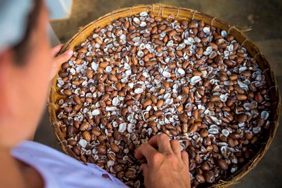 Cerrado: boas práticas no manejo da palmeira Gueroba
