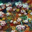 Espécie natural dos Oceanos Índico e Pacífico vem causando prejuízo ecológico em Santa Catarina  O Litoral de Santa Catarina está sendo invadido pelo coral-sol, espécie natural dos Oceanos Índico […]