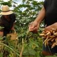 Na última sexta-feira (20), o Ministério do Desenvolvimento Agrário (MDA), confirmou que 343 mil agricultores do Ceará estão aptos para receber o Garantia-Safra. Com esse número, o Ceará supera a […]