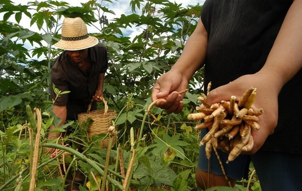 Ceará superou a meta com 343 mil agricultores inscritos no programa