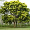 Mais de duas mil espécies de plantas estão ameaçadas de extinção no Brasil. O dado faz parte do Livro Vermelho da Flora do Brasil, um levantamento de 4.617 espécies da […]