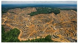Brasil é responsável por 39% do desmatamento do mundo entre 2005 e 2010