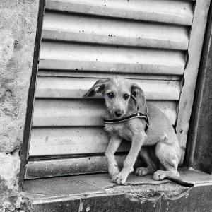 Foto: Patricia Patriota