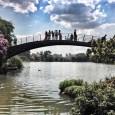 Fundação SOS Mata Atlântica analisou a qualidade da água de 96 rios, córregos e lagos que passam pelo bioma Mata Atlântica, em sete diferentes estados do Brasil. Apenas 11% apresentam […]