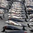 Corte internacional decidiu que a prática não tem finalidades científicas, como alegavam os japoneses A mais alta corte das Nações Unidas concluiunesta segunda-feira, 31,que a caça de baleias praticada pelo […]