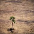 Fernando Caulyt, da Deutsche Welle O Sudeste passa pela pior seca dos últimos 80 anos, com mais 130 municípios de São Paulo, Rio de Janeiro e Minas Gerais afetados. Um […]
