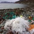 por Manipadma Jena,do IPS Atenas, Grécia –Um albatroz de pata negra alimentando seus filhotes com bolinhas de plástico, um bebê foca no Polo Norte com um saco enrolado no pescoço […]