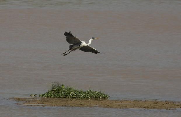 9738 Pássaro voa em represa em Itu que chegou a apenas 2% de sua capacidade. Itu é uma das cidades mais afetadas pela crise da água no Sudeste (Foto: Andre Penner/AP)