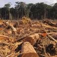 Por Leão Serva em 11/11/2014 na edição 824 -Reproduzido daFolha de S.Paulo, 10/11/2014  A imprensa parece ter acordado para a maior tragédia ambiental em curso nesta região do planeta, […]