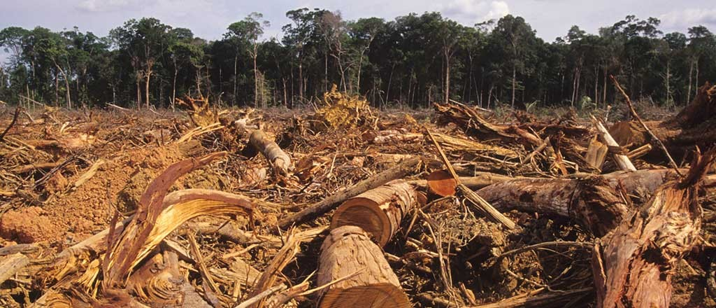 http://knowledge.wharton.upenn.edu/wp-content/uploads/2014/01/Amazon-Rainforest-Deforestation-1024x440.jpg