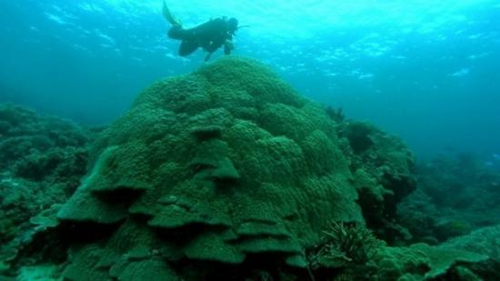 Indústria de recreação ligada ao turismo e mergulho depende dos corais, assim como a pesca artesanal em várias partes do mundo