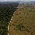 Números do Imazon lançam um alerta para as autoridades brasileiras. Maior parte da área desmatada é privada e usada para produzir alimentos. O Bom Dia Brasil teve acesso, com exclusividade, […]