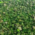 Por Instituto de Pesquisas Ambientais da Amazônia Programa de Assentamentos Verdes (PAV) foi criado pelo Governo Federal para prevenir e combater o desmatamento ilegal e promover o desenvolvimento sustentável nos […]