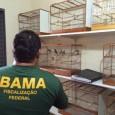 Pelo menos 23 mandados de prisão, sendo duas preventivas e 21 temporárias, além de mandados de busca e apreensão foram cumpridos ontem pela Polícia Federal para desmantelar um esquema de […]