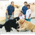 Rafaela Matias Usados em divertidas sessões com os pacientes, animais ajudam a tratar doenças crônicas Lambidas em vez de injeção. Carinho com focinhos no lugar dos estetoscópios. Rabinhos que abanam […]