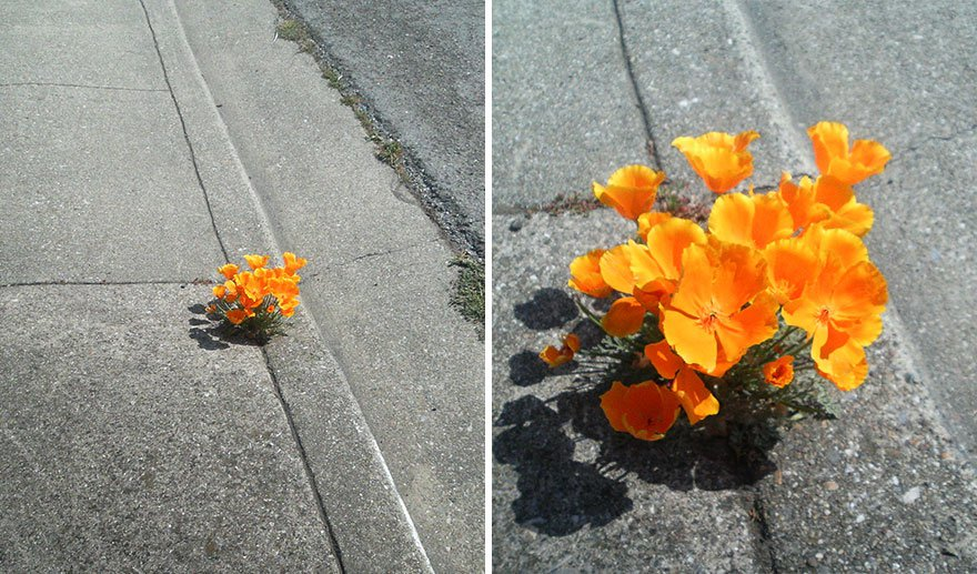 flower-tree-growing-concrete-pavement-11