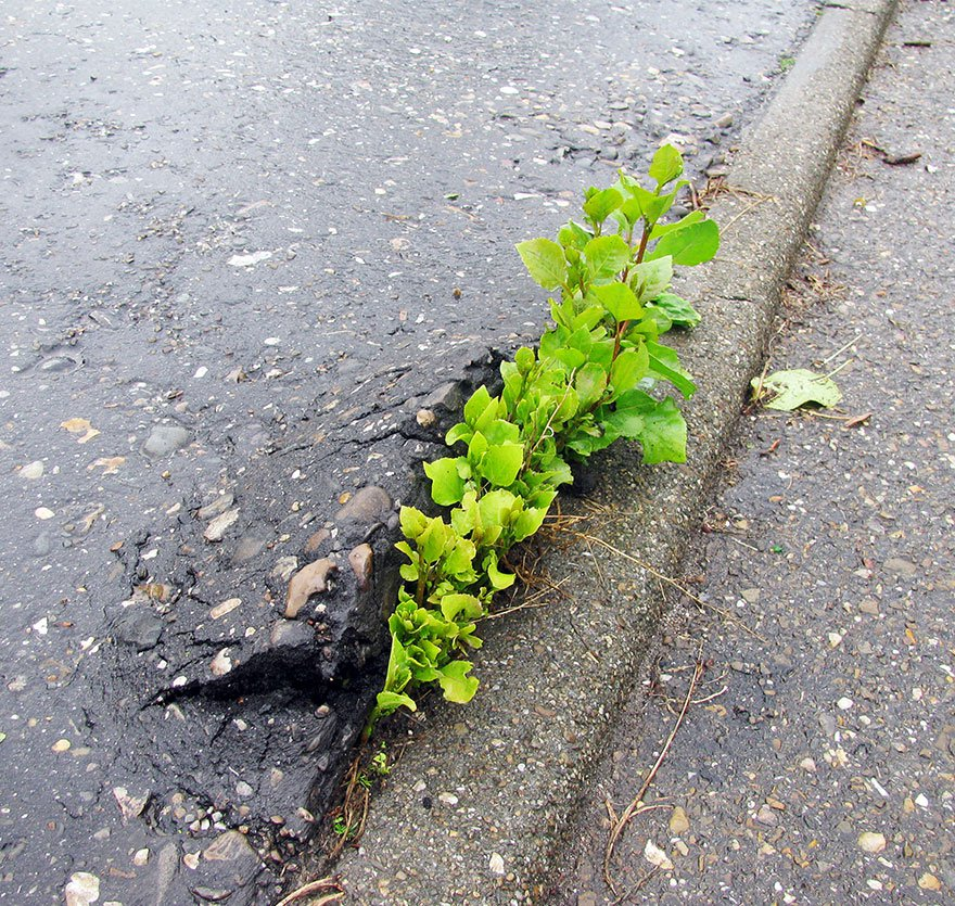 flower-tree-growing-concrete-pavement-21