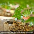 A Secretaria de Meio Ambiente e Sustentabilidade do Recife (SMAS) concluiu nesta semana o plantio de 143 novas árvores no bairro do Bongi, um dos mais áridos da cidade. As […]