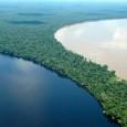 A perda da vegetação florestal e a conversão do terreno a outros usos podem repercutir negativamente nas reservas de água doce, colocar em perigo a sobrevivência de milhões de pessoas […]