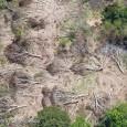No final do ano passado, a Amazônia estampou os jornais do país e do mundo com uma infeliz manchete: desmatamento aumenta 29%. Pior, essa triste notícia não vinha sozinha. Nos […]