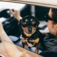 Uma pesquisa de cientistas austríacos afirma confirmar algo que muita gente já diz há algum tempo: os cães desenvolvem uma personalidade parecida com a de seus donos. Alguns animais expressam […]