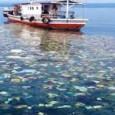 Em 2050, oceanos podem ter mesma quantidade de peixes e plástico. Alerta é do embaixador de Portugal junto às Nações Unidas, que é um dos organizadores de encontro preparatório para […]