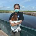 Uma bebê orangotango de Bornéu adotada como animal de estimação por uma família, uma prática frequente na Indonésia, foi resgatada por uma ONG de defesa dos animais. Vena, uma fêmea […]