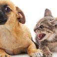 A crença de que cachorros são mais inteligentes do que gatos acaba de ser colocada em xeque por cientistas japoneses. Para esses especialistas, os bichanos podem ser tão espertos quanto […]