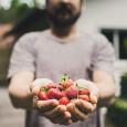 Muito além do sabor, cinco porções diárias de frutas, legumes e hortaliças podem salvar a sua vida. É isso o que afirma a Organização Mundial da Saúde (OMS) ao concluir, […]