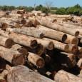 A apreensão de veículos para impedir o desmatamento ilegal é medida administrativa legal e impede que novas condutas nocivas ao meio ambiente sejam cometidas – esse é o posicionamento defendido […]
