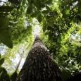 Quase cinco anos depois de sua aprovação, o Código Florestal (Lei 12.651/2012) ainda não foi totalmente implementado. Organizações ambientais avaliam que, dos 14 pontos do novo código que elas consideram […]