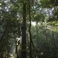 A Floresta Amazônica corre o risco de cair em um círculo vicioso de seca e desmatamento provocado pela ação humana e pela redução das precipitações na região, segundo um estudo […]