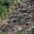 Atendendo à pedidos de parlamentares do Amazonas, o ministro da Casa Civil, Eliseu Padilha, e Michel Temer podem encaminhar ao Congresso Nacional uma proposta para acabar com uma Unidade de […]