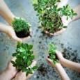 A assinatura do decreto presidencial criando a Política Nacional de Recuperação da Vegetação Nativa (Proveg), em janeiro, é fundamental para o cumprimento dos compromissos internacionais e nacionais assumidos pelo Brasil […]