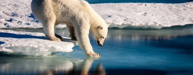 Após um ano de 2016 com temperaturas em nível recorde no qual a banquisa (água do mar congelada) no Ártico seguiu minguando e o nível do mar subindo, as Nações […]