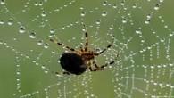 Todas as aranhas do mundo comem por ano um total de 400 milhões a 800 milhões de toneladas de insetos e pequenos animais. Assim, elas batem o consumo humano, que […]