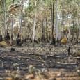 Estudo internacional, coordenado por pesquisadores brasileiros e publicado hoje (23) na revistaNature Ecology and Evolution, aponta perda significativa de espécies nativas do Cerrado nos próximos 30 anos se o ritmo […]