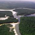 Um grupo de pesquisadores da Universidade de Brasília, em parceria com cientistas europeus, descobriu que o rio Amazonas é oito milhões de anos mais velho do que se pensava. A […]