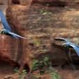 Um macho de arara-azul-de-lear, espécie ameaçada de extinção, foi devolvido ao Brasil após ser contrabandeado para a Argentina. A ave chegou nesta quarta-feira (5) ao país pelo Aeroporto Internacional de […]