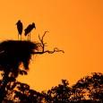 Seminário internacional vai debater o futuro do Pantanal, umainiciativa do Instituto SOS Pantanal que pretende debater os erros e os acertos de regiões semelhantes ao Pantanal brasileiro e suas opções […]