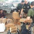 Policiais Militares da Companhia Independente de Policiamento do Meio Ambiente (Cipoma) com o apoio do Núcleo de Inteligência das Especializadas, prenderam nesta segunda-feira, em Caruaru, sete pessoas acusadas de tráfico […]