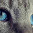 Quão difícil pode ser domar um gato? Pergunte a Daniel Mills, professor de Veterinária comportamental na Universidade de Lincoln (Reino Unido). Em um estudo recente, Mills e sua colega Alice […]